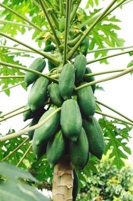 Raw Papaya Scrub