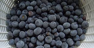 Image 1 22 - 10 Nutritional Facts About Blueberries And Recipes You Must Try