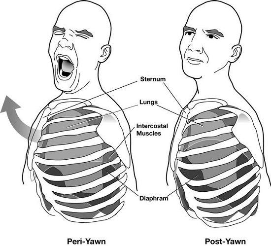 Yawning Diagram