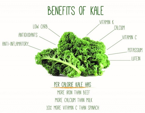 Image 2d - All You Need To Know About Kale Chips