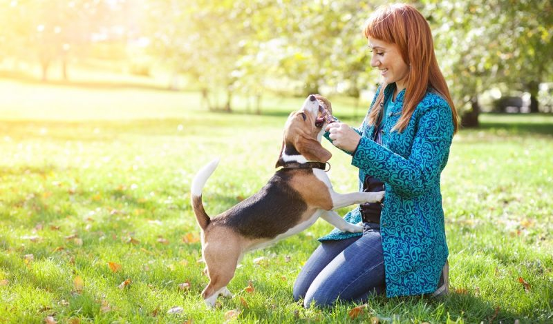 All You Need to Know About Pets Improving Your Health