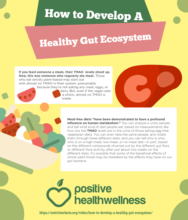 How To Develop A Healthy Gut Ecosystem