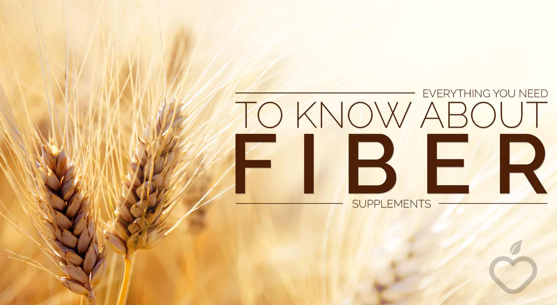 Fiber Supplements Image Design 1 - Everything You Need To Know About Fiber Supplements